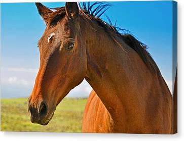 Canvas Print featuring the photograph Horse by Sabine Edrissi