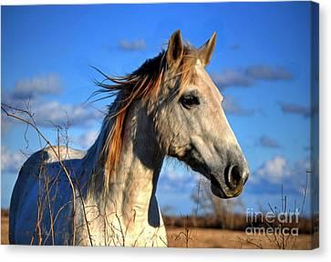 Canvas Print featuring the photograph Horse by Savannah Gibbs