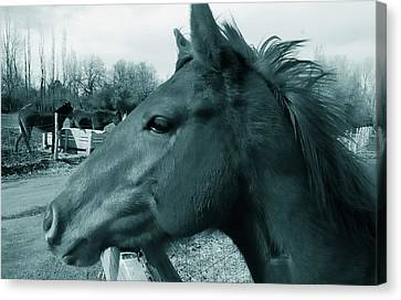 Horse Sense Canvas Print by Steven Milner