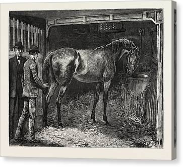 Horse Stable Canvas Print - Horse, Stable, Engraving 1884, Life In Britain, Uk, Britain by Hopkins, Arthur (1848-1930), English School
