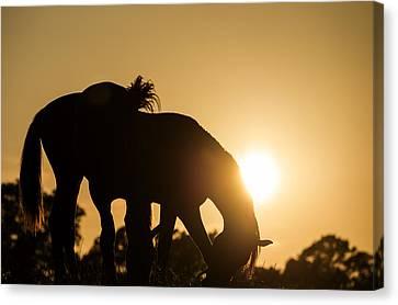 Horse Sunset Canvas Print by Michael Mogensen