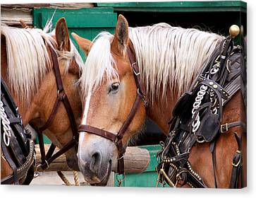 Canvas Print featuring the photograph Horse Talk by Trever Miller