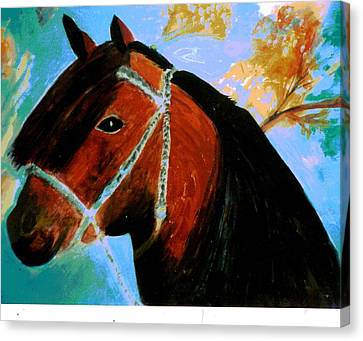 Forelock Canvas Print - Horse With Long Forelocks by Anne-Elizabeth Whiteway