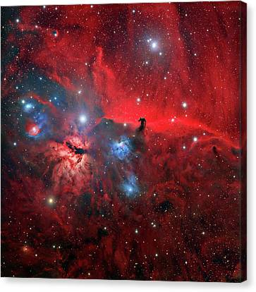 Horsehead And Flame Nebulae Canvas Print by Tony & Daphne Hallas