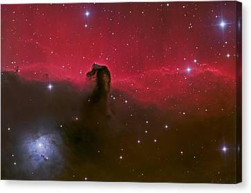 Horsehead Nebula Canvas Print by Brian Peterson