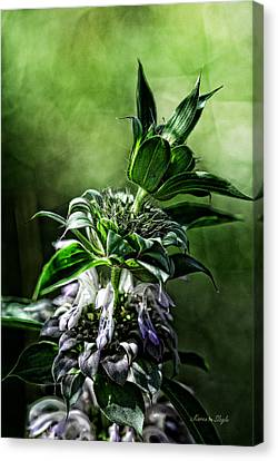 Canvas Print featuring the photograph Horsemint by Karen Slagle