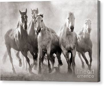 Charging Horses Canvas Print - Horses And Dust by Heather Swan