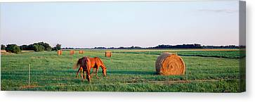 Horses And Hay, Marion County Canvas Print by Panoramic Images