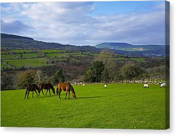 Horses And Sheep In The Barrow Valley Canvas Print by Panoramic Images