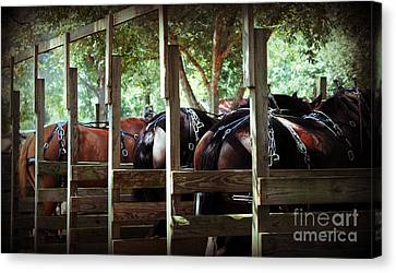 Horses Arse Canvas Print