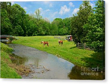 Horses At Home On The Range Canvas Print
