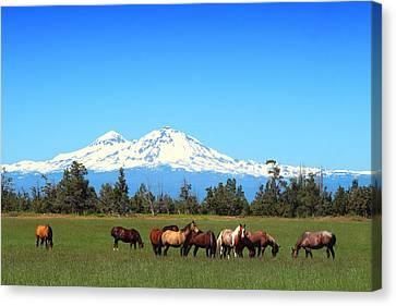 Horses At Sisters Mountain Canvas Print