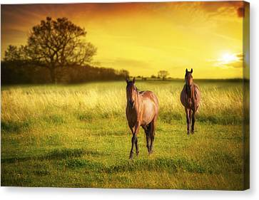 Horses At Sunset Canvas Print by Amanda Elwell