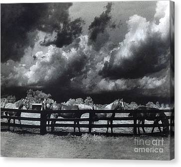 Horses Black And White Infrared Stormy Sky Nature Landscape Canvas Print by Kathy Fornal