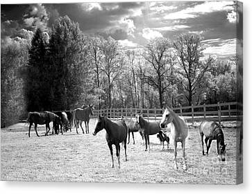 Horses Black And White Infrared - Surreal Horses Black White Nature Landscape Equine Canvas Print by Kathy Fornal