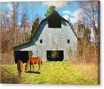 Horses Call This Old Barn Home Canvas Print by Sandi OReilly