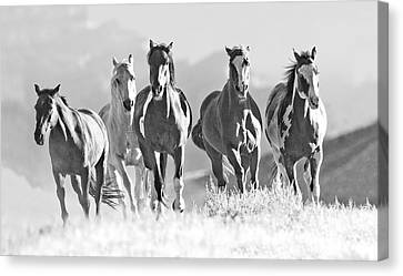 Horses Crest The Hill Canvas Print by Carol Walker