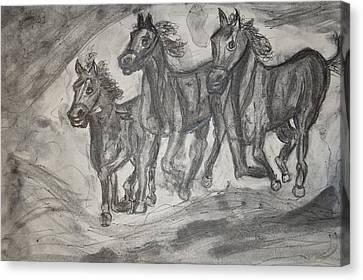 Horses Canvas Print by Daniele Fedi