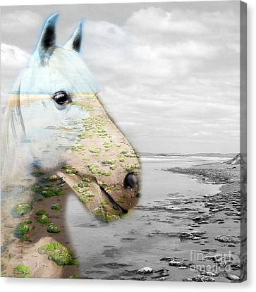 Horses Dream Canvas Print by Jo Collins