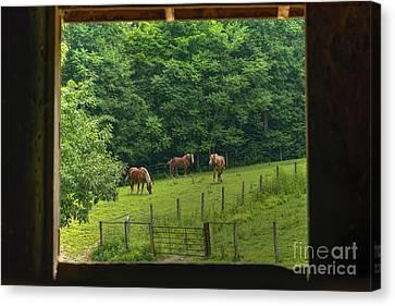 Horses Feeding In Field Canvas Print by Dan Friend