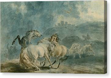 Horses Fighting Canvas Print by Sawrey Gilpin