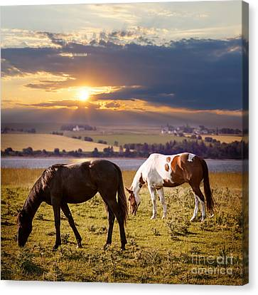 Two Suns Canvas Print - Horses Grazing At Sunset by Elena Elisseeva