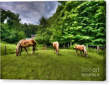 Horses Grazing In Field Canvas Print by Dan Friend