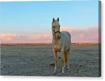 Sean Horse Canvas Print - Horses In A Field At Sunrise by Sean Phillips