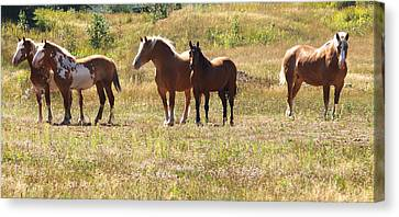 Canvas Print featuring the photograph Horses In A Field by Susan Crossman Buscho