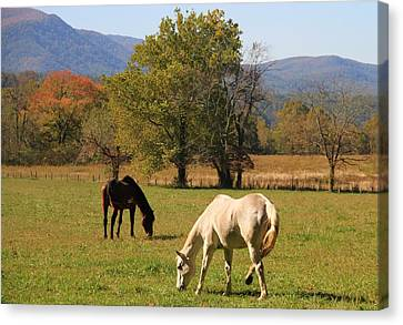 Horses In Cades Cove Canvas Print by Dan Sproul