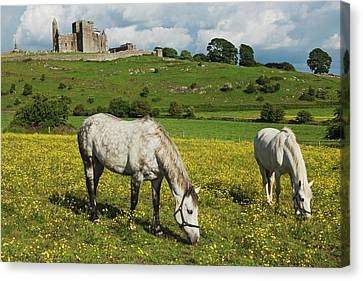 Horses In Front Of Rock Of Cashel Canvas Print by Carl Bruemmer