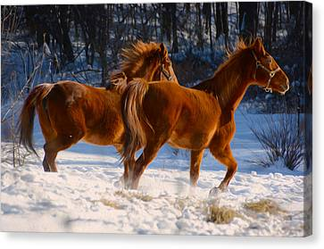 Horses In Motion Canvas Print