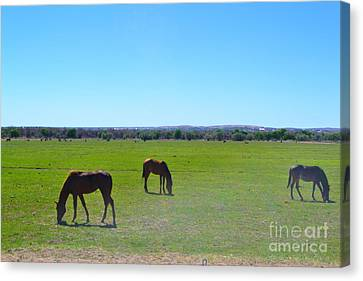 Canvas Print featuring the photograph Horses In New Mexico by Utopia Concepts