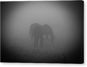 Canvas Print featuring the photograph Horses In The Mist. by Cheryl Baxter