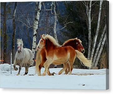 Canvas Print featuring the photograph Horses In The Snow by Elaine Franklin