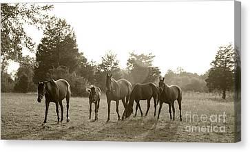 Horses In The Sun Canvas Print by John Debar