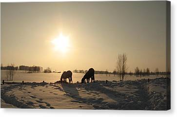 Horses In Winter Canvas Print by Zina Stromberg