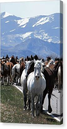 Horses On Road Canvas Print