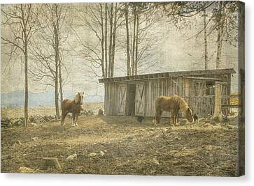 Horses On The Farm Canvas Print by Betty  Pauwels