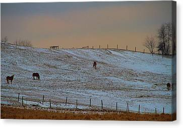 Horses On The Farm In Winter Canvas Print by Dan Sproul