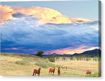 Horses On The Storm 2 Canvas Print by James BO  Insogna