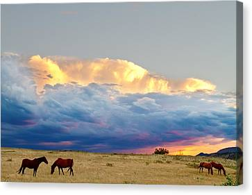 Horses On The Storm Canvas Print by James BO  Insogna