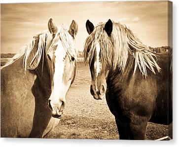 Horses  Canvas Print by Paulina Szajek