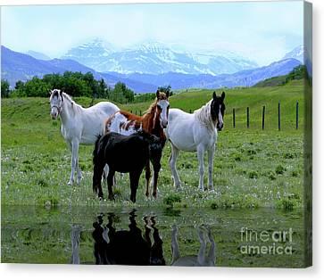 Horses Reflected Canvas Print