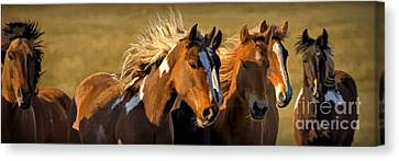 Horses - Running Free Canvas Print by Wildlife Fine Art