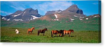 Horses Standing And Grazing In A Canvas Print by Panoramic Images