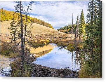 Horsethief Creek Beaver Pond - Cripple Creek Colorado Canvas Print by Brian Harig