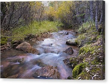 Horsethief Creek - Cripple Creek Colorado Canvas Print