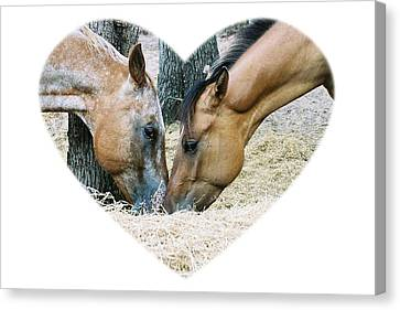 Horsey Love Blitzen And Tina Canvas Print