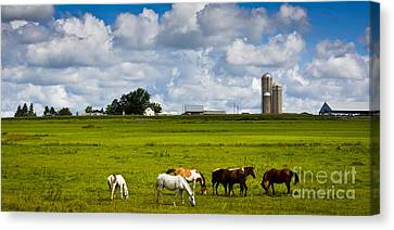 Canvas Print featuring the photograph Horsing Around  by Ricky L Jones